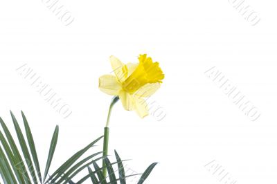 a yellow flower on a leaf