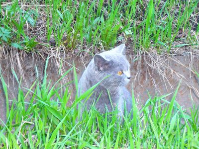 A cat, sitting among the grass.