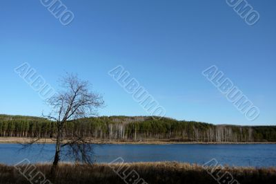 Lonely tree on a lake/