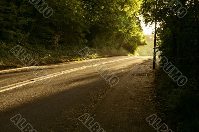 Picturesque autumnal forest on a morning with the sunlight falling on rural lane.