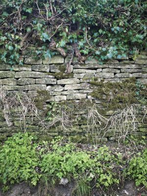 wall with moss and plants