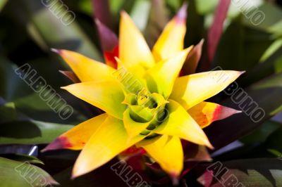 Spikey Tropical Flower