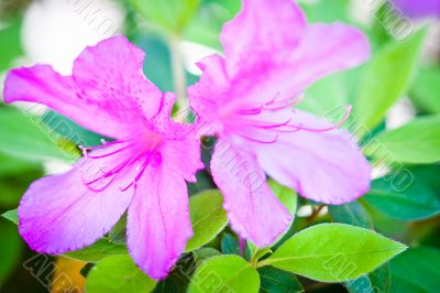 Vibrant Duo Flowers