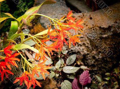 wispy orange petals