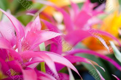 pink tropical plants