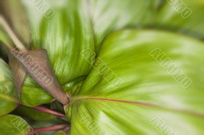 tropical leaf close up