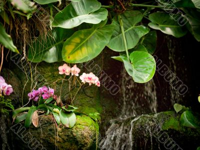 small orchid waterfall