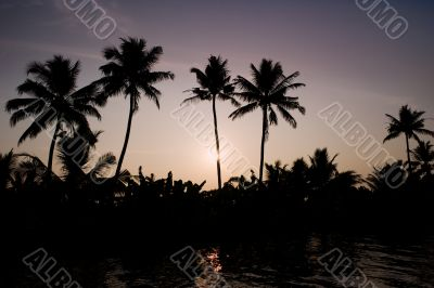 silhouetted palms