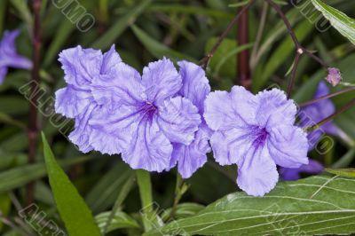 Silk Violet Flowers