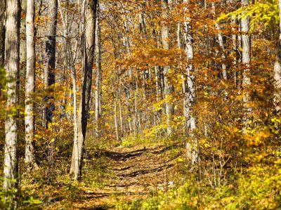 rocky hiking trail