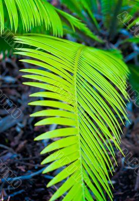 walkway fern