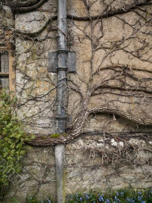 Piping and Vines