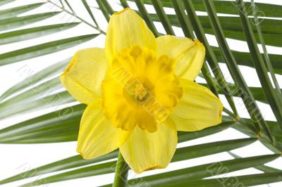 yellow flower and palm leaf