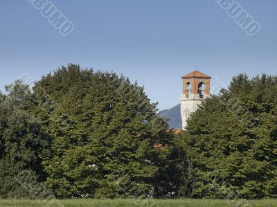 tall trees covering the church in tuscany