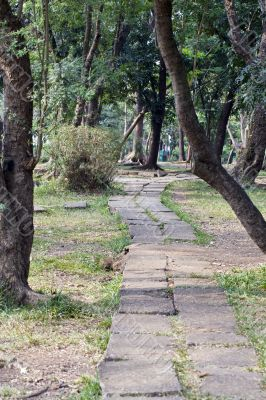 pathway of the park