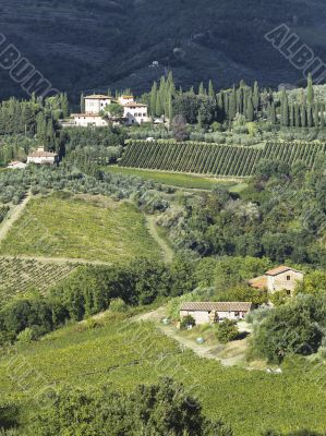 view of a tuscan vinyard
