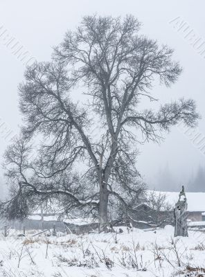 tree on snow