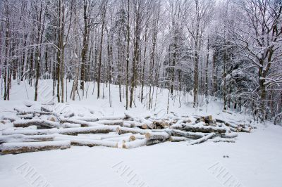 logs in the snow