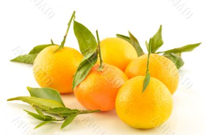 Tangerine with leaves on a white background
