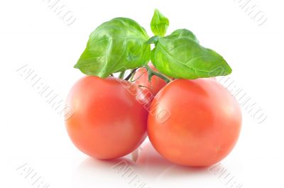 Sprig and tomato on a white background