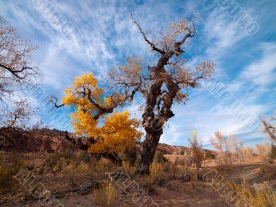 tree turning in autumn