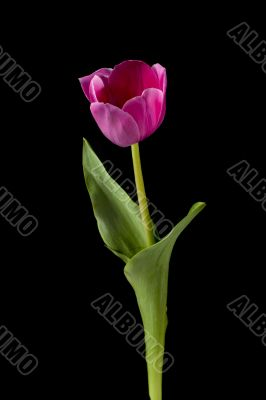 vertical image of a pink flower