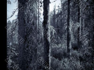 Tree Fur