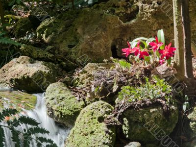 waterfall and bright pink flowers