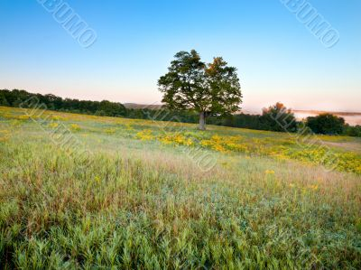 single tree in meadow