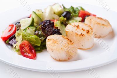 Salad of scallops on a white plate