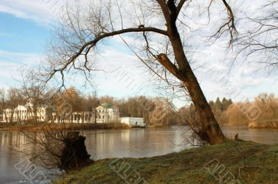 Autumn trees on the lakes bank