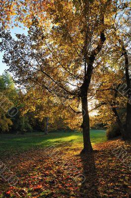 Autumn Light in Park