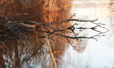 Dry tree in water