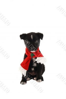 Puppy in a Christmas Holiday Scarf