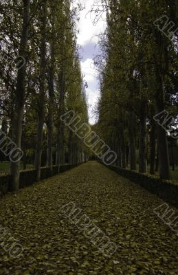 Beautiful lane with tall trees on both sides of the pathway in a