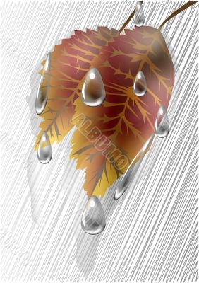 Autumn leaves under the rain