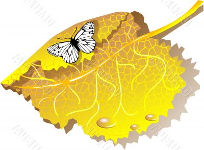 Autumn leaves and butterfly