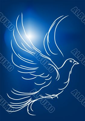 white dove in a blue sky