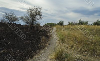 Scorched field