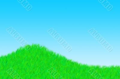 Grass on a sunny day