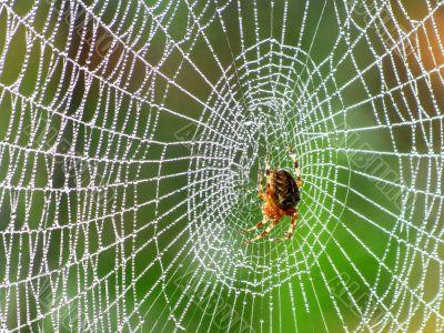 Spider behind work