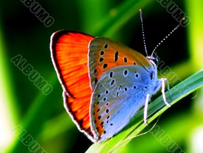 The butterfly sits on a green leaflet