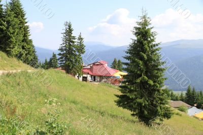 Little House on the hillside and surrounded by pine trees
