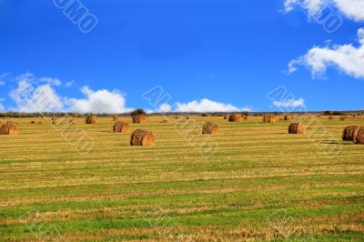 Hay, field and blu sky