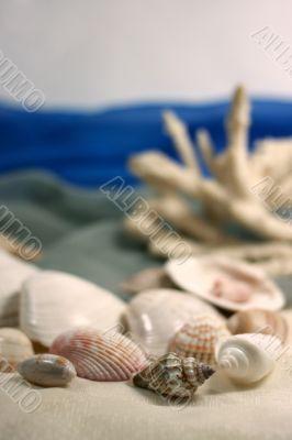 Coral and cockleshells