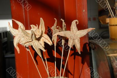 Starfish on a Stick