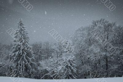 Carpathians in winter