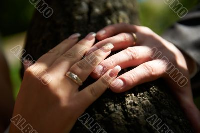 Touch of the hands of bride and groom with rings