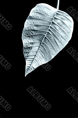 Leaf structures