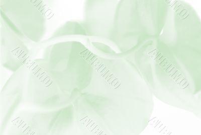 Green plant softly